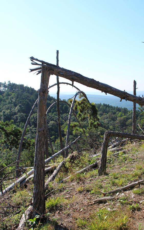 Some fallen pine-trees. A pine-tree forest near Budakeszi, Hungary stock photos