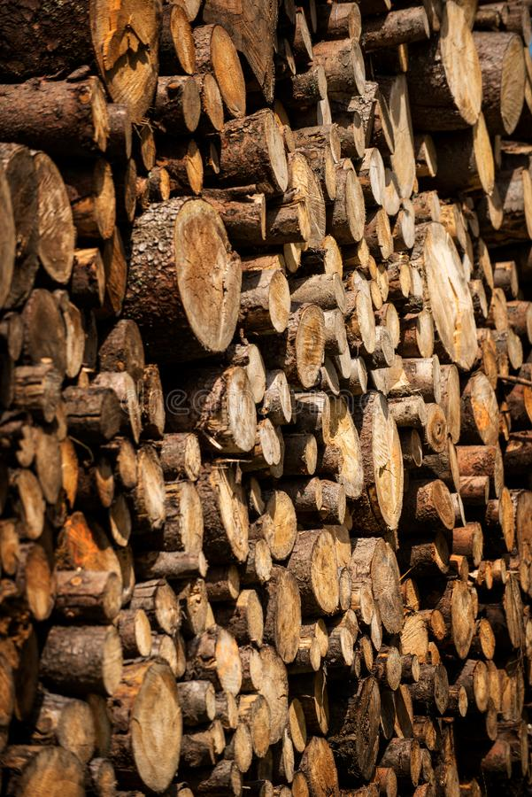 Pine tree forestry exploitation. Stumps and logs. Overexploitation leads to deforestation endangering environment. Pine tree forestry exploitation. Stumps and royalty free stock image