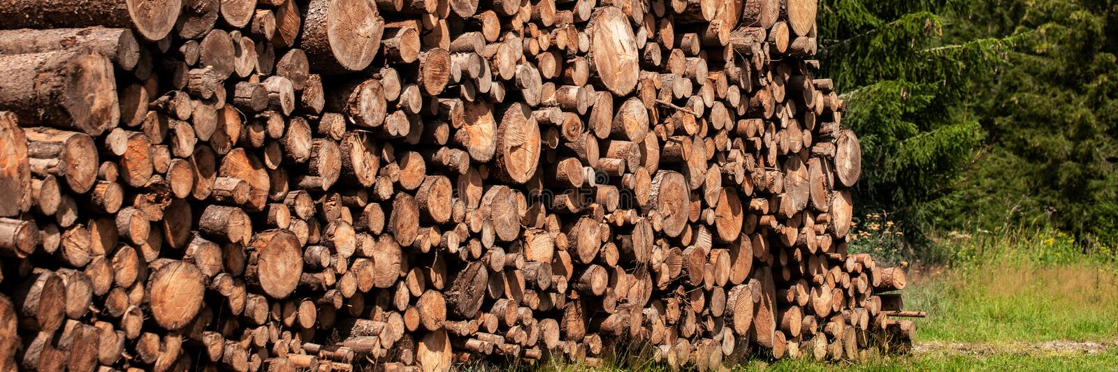 Pine tree forestry exploitation. Stumps and logs. Overexploitation leads to deforestation. Timber logging industry. Pine tree forestry exploitation. Stumps and royalty free stock images