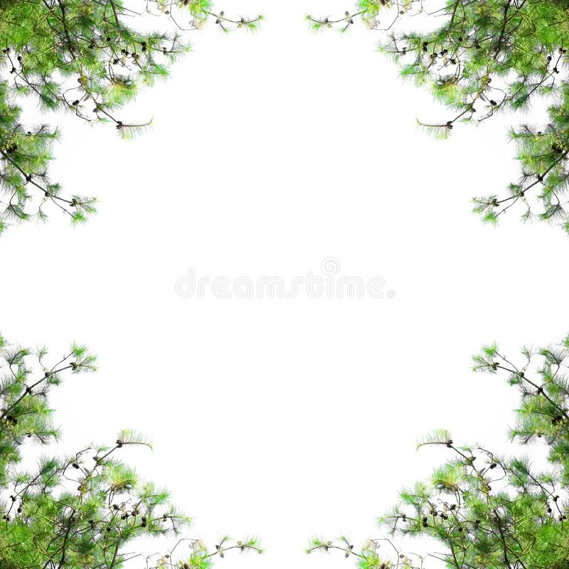 Pine tree frame with blank space. Christmas border with fir branches isolated on white background. stock photo