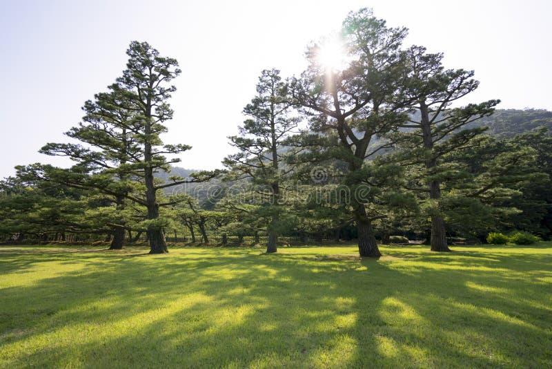 Download Pine Tree Garden 1 Stock Photo   Image: 75091135