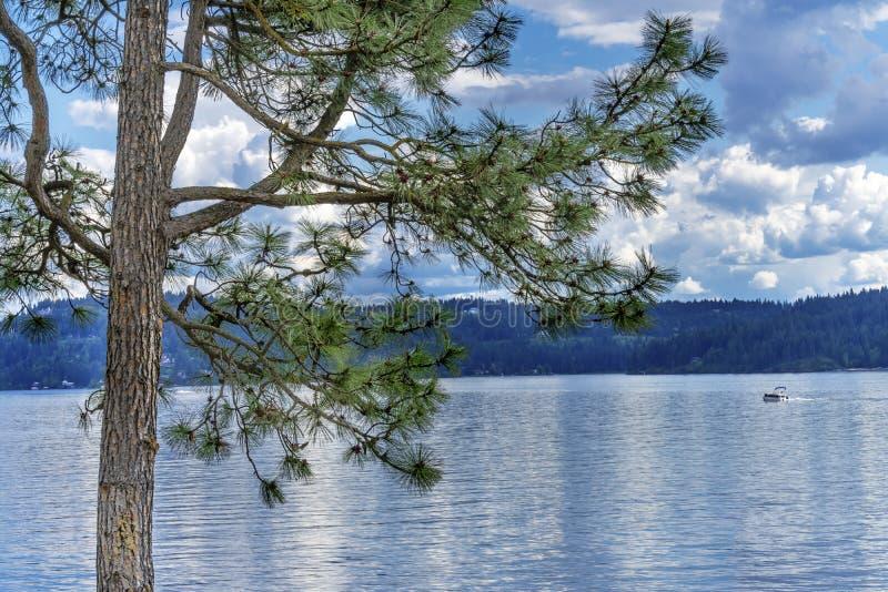 Pine Tree House Boat Reflection Lake Coeur d` Alene Idaho. Pine Evergreen Tree House Boat Reflection Lake Coeur d` Alene Idaho royalty free stock photo