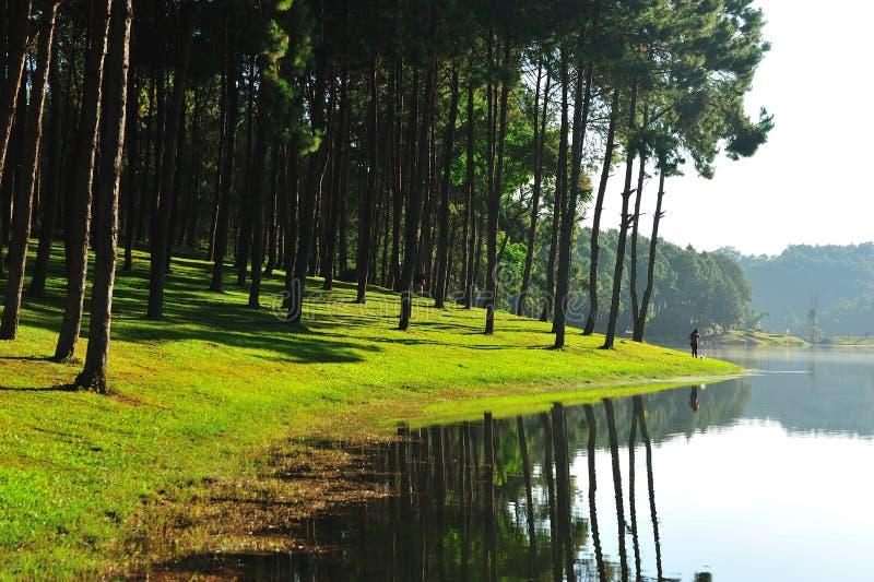 Download Pine Tree On Lake Royalty Free Stock Images - Image: 24755539