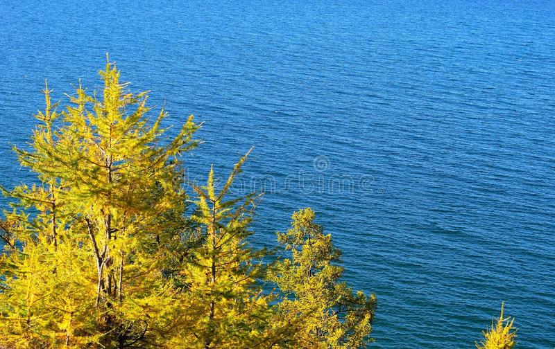 Download Pine tree. Lake Baikal. stock image. Image of sunlight - 11270701