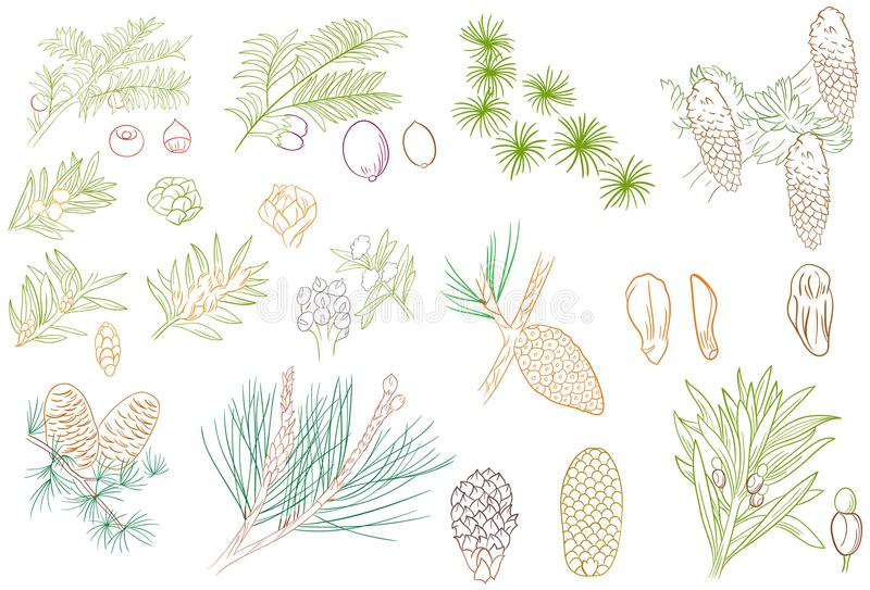 Pine Tree Leaves and Fruit Outline. Or line art as graphic design element and background, clothes and stationery pattern, coloring book, education purpose book royalty free illustration
