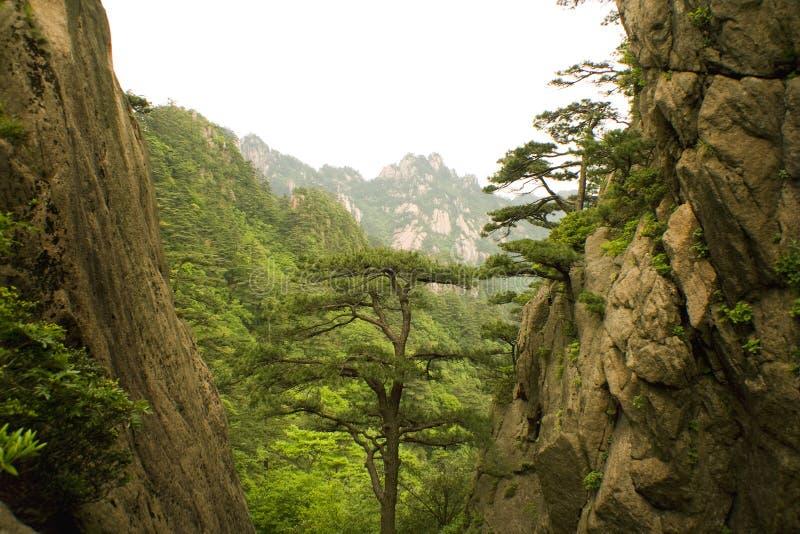 Pine tree and the mountain, china stock photo
