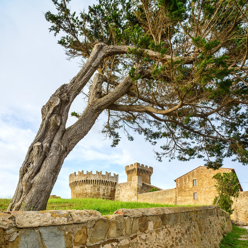 Pine tree in Populonia medieval village landmark, city walls and tower on background. Tuscany, Italy. Pine tree in Populonia medieval village landmark, city royalty free stock photos
