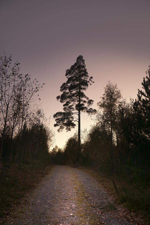 Download Pine tree on purple sky stock image. Image of fall, evening - 21932157