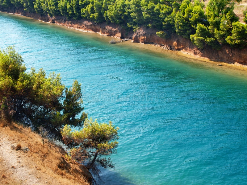 Pine Tree And Sea Royalty Free Stock Photography