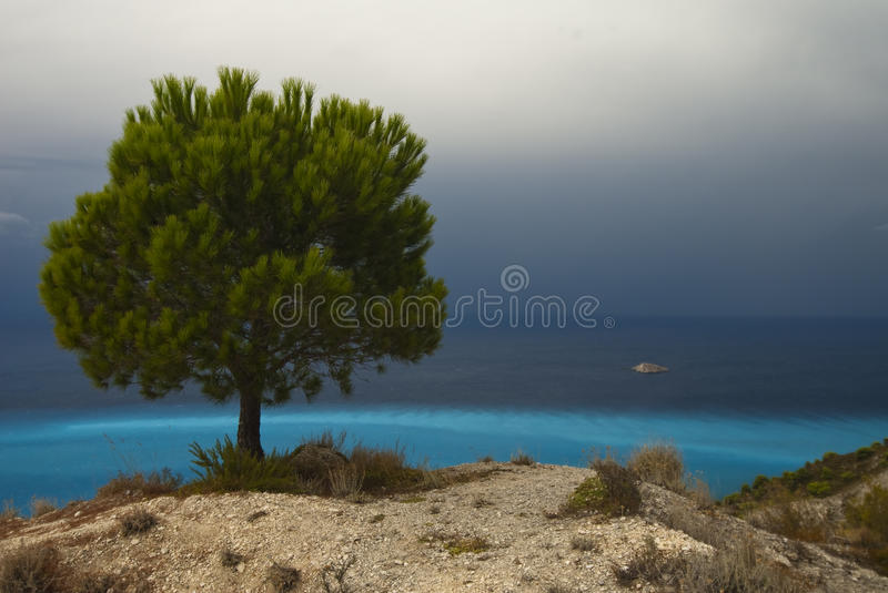 Pine Tree On The Seashore With Azure Water Royalty Free Stock Photo