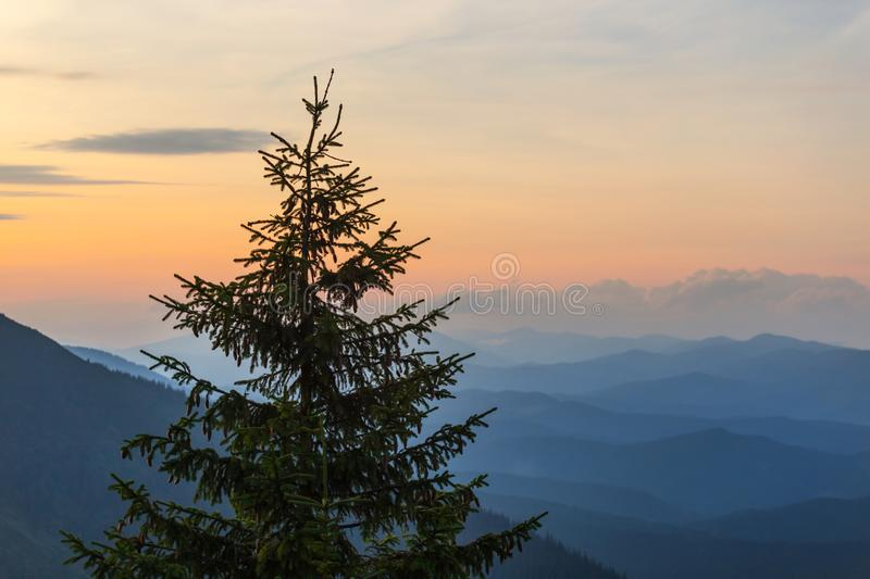 Pine tree silhouette on a sunset background royalty free stock photo
