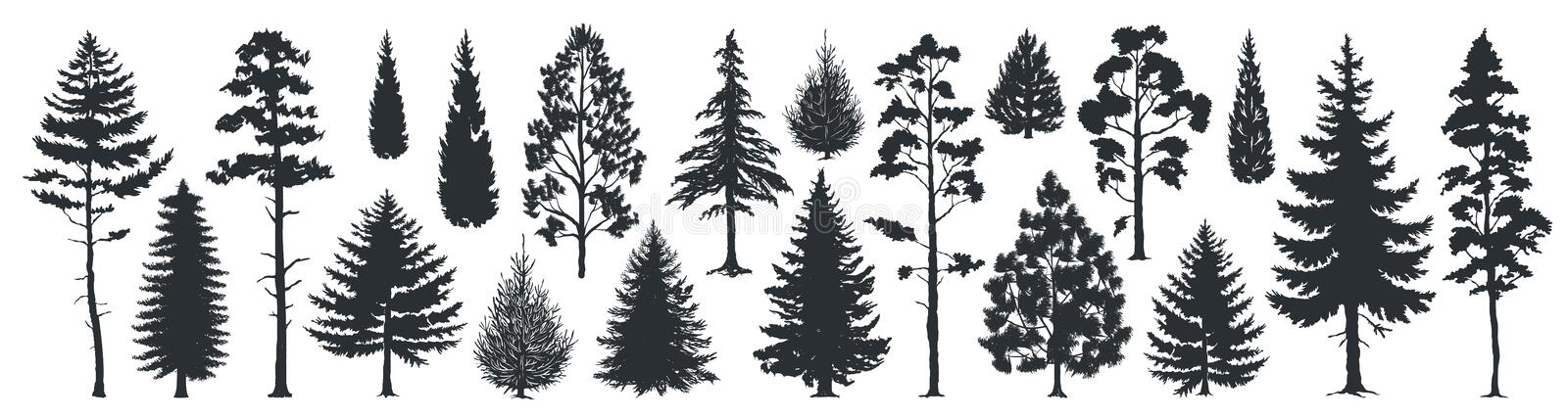 Pine tree silhouettes. Evergreen forest firs and spruces black shapes, wild nature trees templates. Vector woodland. Pine tree silhouettes. Evergreen forest firs stock illustration