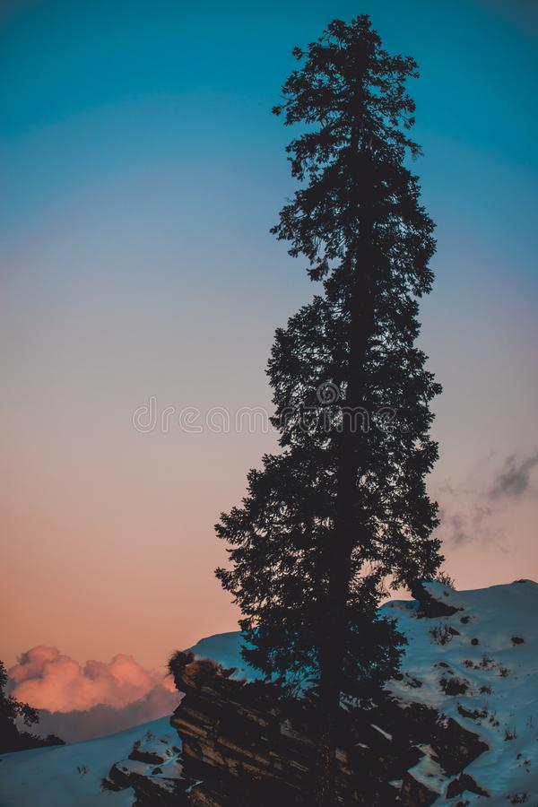 Pine Tree on Snow Covered Hill Under White and Blue Sky at Daytime stock photography