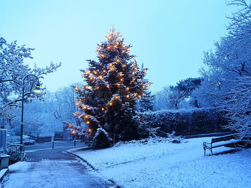 Pine Tree With Snow And Lights stock image