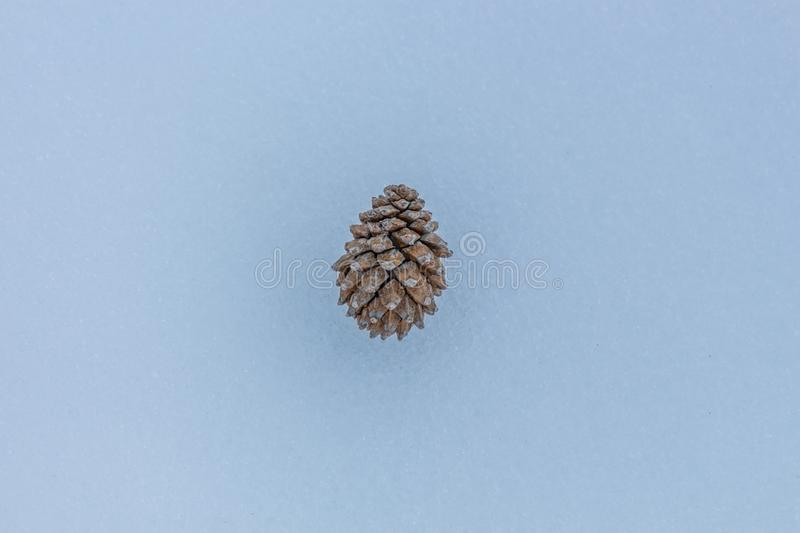 Pine tree in the snow. Nature element concept stock images