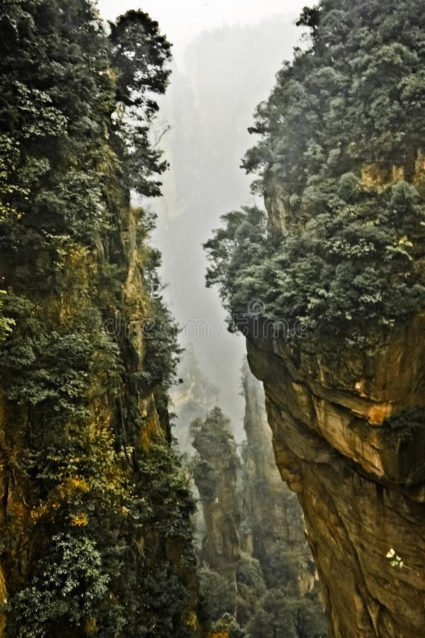 A pine tree on a steep rocky cliff. China stock images