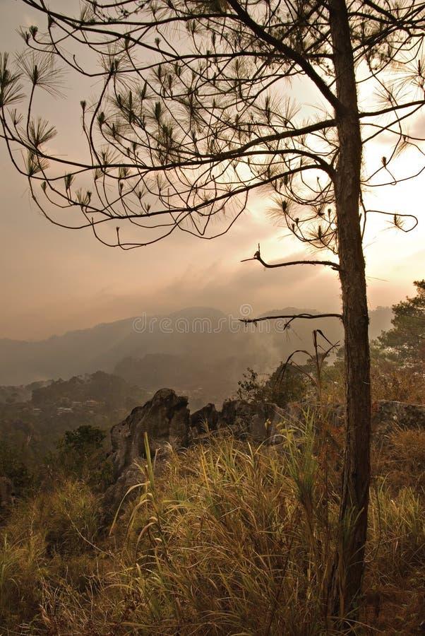 Download Pine Tree Sunset stock image. Image of hope, fresh, larch - 13811963
