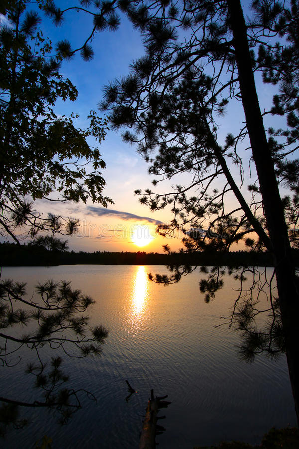 Pine Tree Sunset Silhouette. Beautiful sunset seen through pine trees over a northwoods Wisconsin lake stock photos