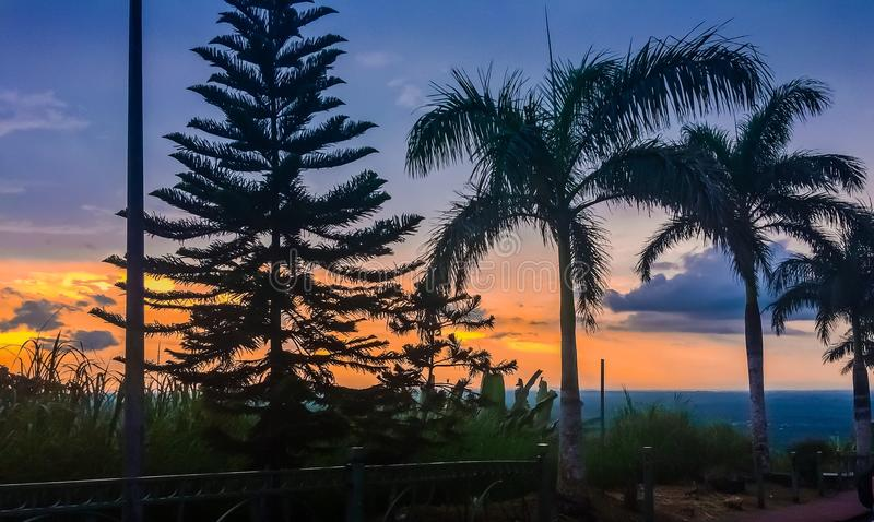 Pine tree and the three non fruit-baring coconut tree over a beautiful sunset. Tagaytay, Philippines is one of the peaceful and non polluted city in the country stock images