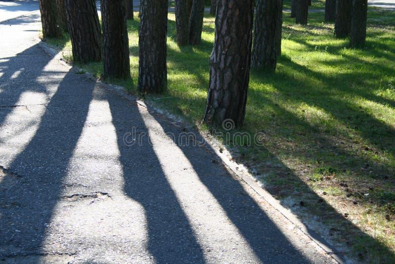 Download Pine Trees Royalty Free Stock Image - Image: 175646