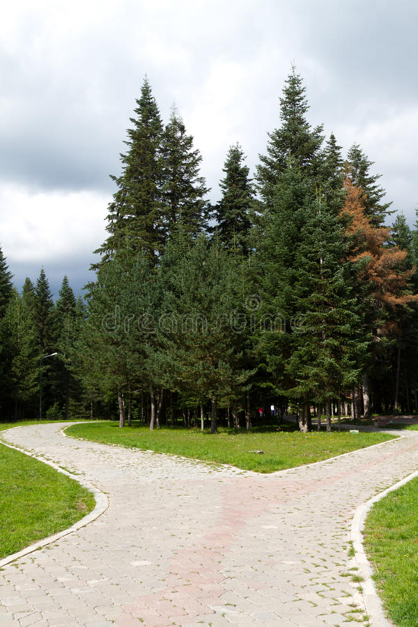 Download Pine Trees Stock Photo - Image: 28199950