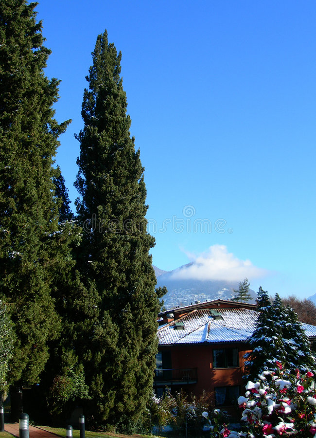 Download Pine Trees Against Clear Blue Sky And Mountains In Switzerland Stock Photo - Image: 1388744