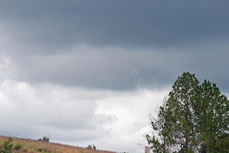 PINE TREES AGAINST CLOUDY SKY. Green trees and vegetation under cloudy sky royalty free stock image