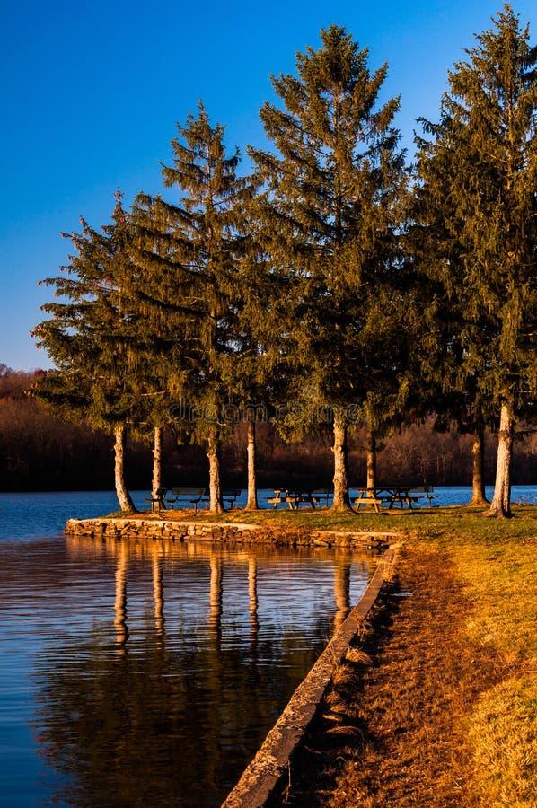 Pine trees along Pinchot Lake in Gifford Pinchot State Park royalty free stock photo