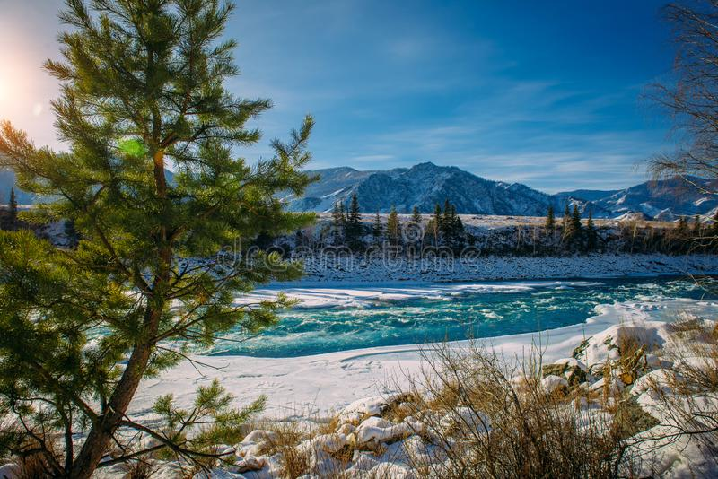 Pine trees, Alpine river and snow-covered shore. Turquoise river in the mountains on a frosty winter day. Incredible mountain royalty free stock photos