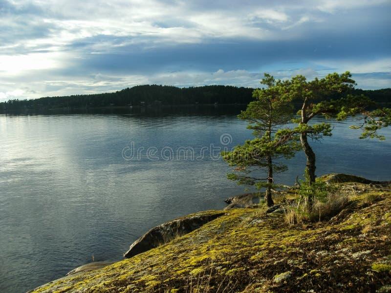 Pine trees, Alsen / Askersund coast. Pine trees on the Alsen coast near Askersund royalty free stock images