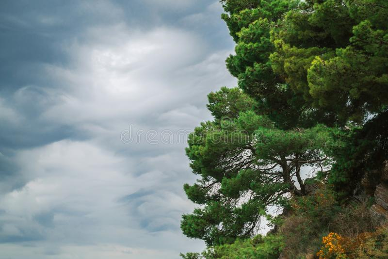 Pine trees on the beach against a cloudy gray sky. The coast of the Adriatic sea stock photo