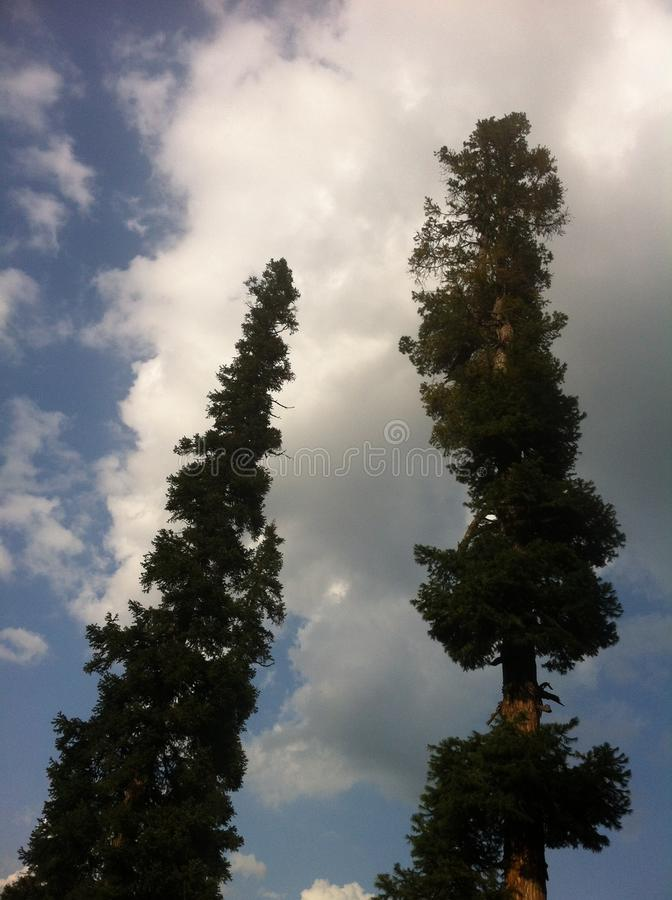 Arang Kel, Azad Kashmir, Pakistan. Pine trees beauty of Kashmir royalty free stock photography