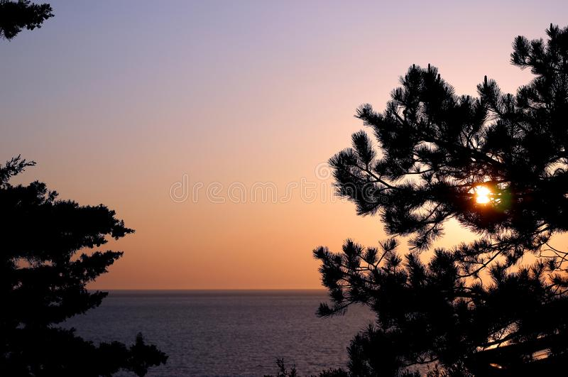 Pine trees branches silhouette on Adriatic sea horizon, beach, sunset landscape background. royalty free stock photos