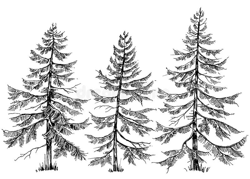 Pine trees collection vector illustration