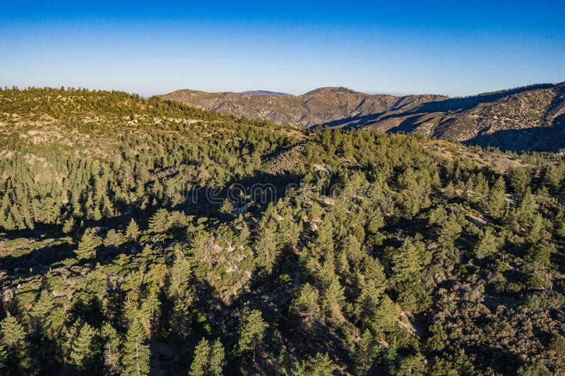 Rolling Pine Forested California Hills royalty free stock photography