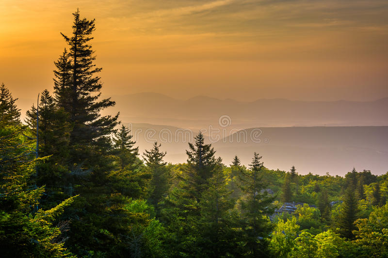 Pine trees and distant mountains at sunrise, seen from Bear Rock stock image