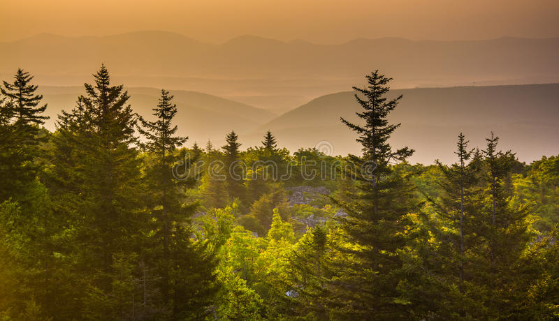 Pine trees and distant mountains at sunrise, seen from Bear Rock stock images