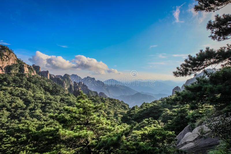 Pine trees dominate the foreground with mountain ranges fading into the horizon with bright blue skies and clouds in Huang Shan. 黄山, Yellow Mountains royalty free stock images