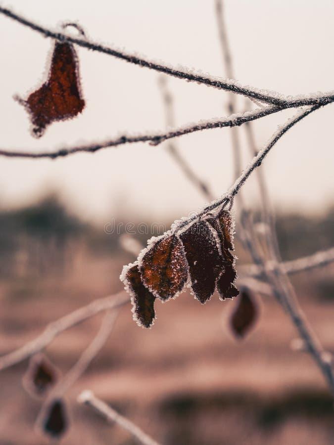 Pine Trees in Field of Kemeri moor in Latvia - vintage look edit stock photography