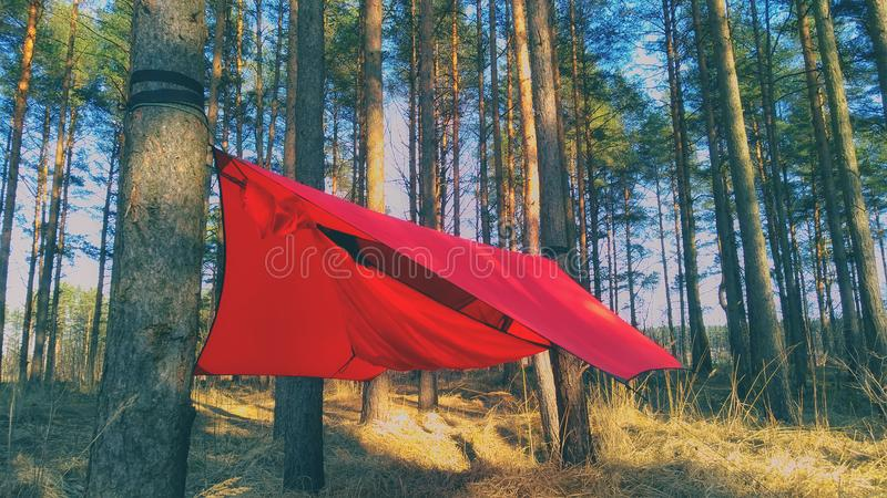 Pine trees and hammock with tent in spring wood stock photos