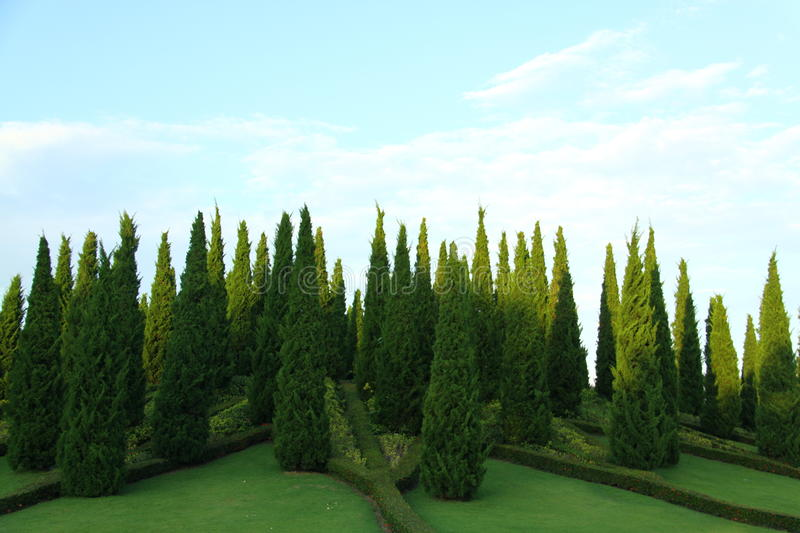 Download Pine Trees In The Hill Park Stock Photo - Image: 32851446