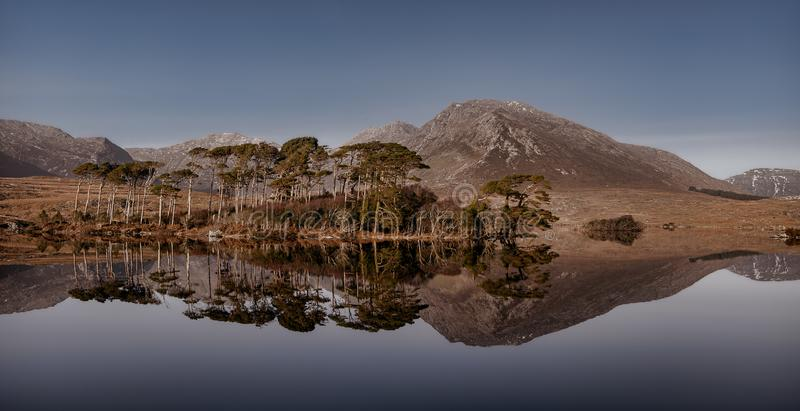 Pine trees island in the Derryclare Lake in Connemara. stock photo