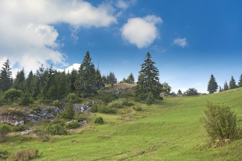 Pine trees and meadow stock images
