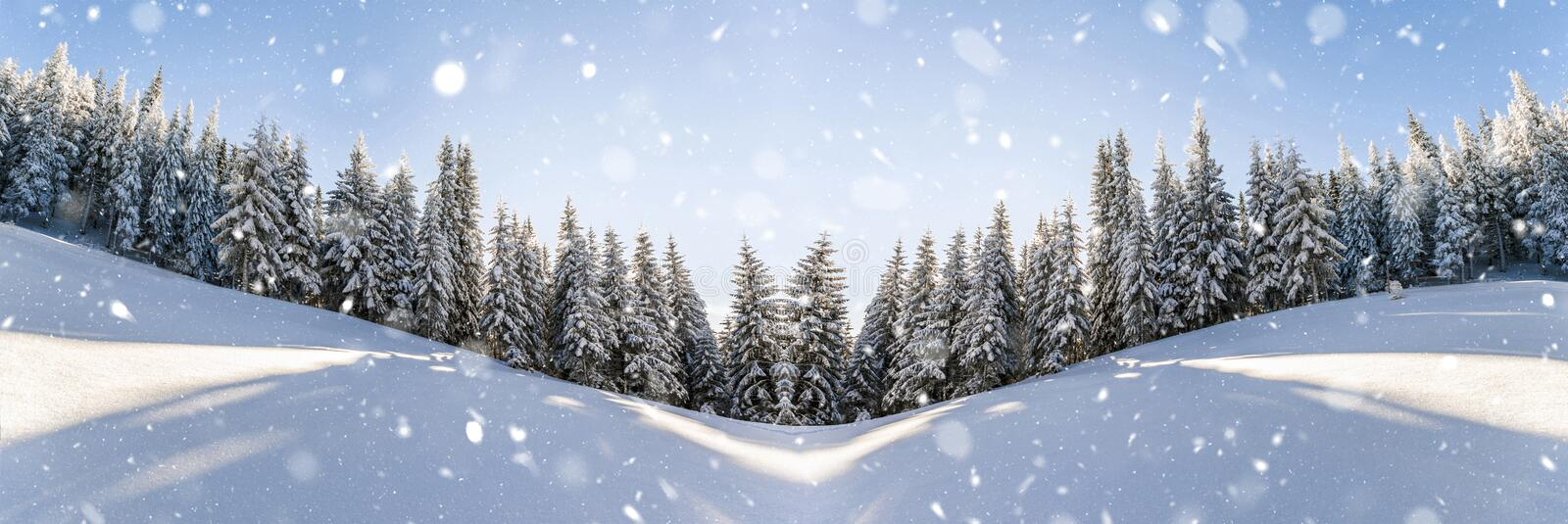 Pine trees in mountains and falling snow in fairy tale winter sunny morning. Soft ligth effect. royalty free stock photos