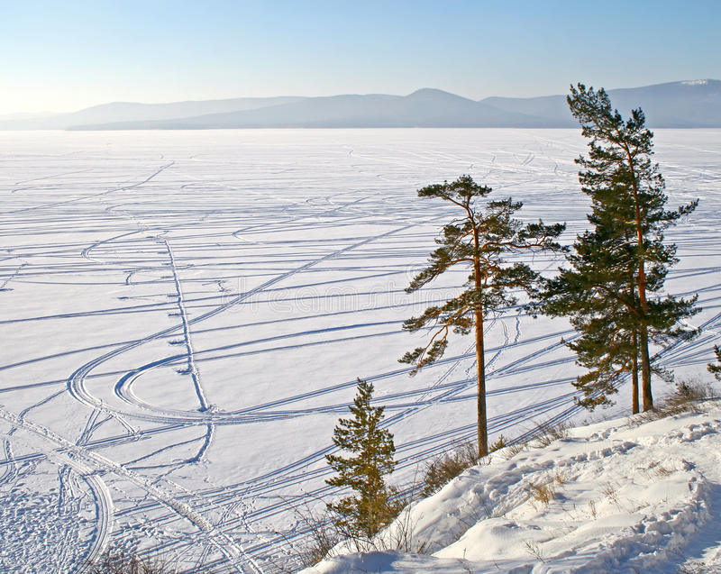 Download Pine trees near a lake stock image. Image of russian - 18038447