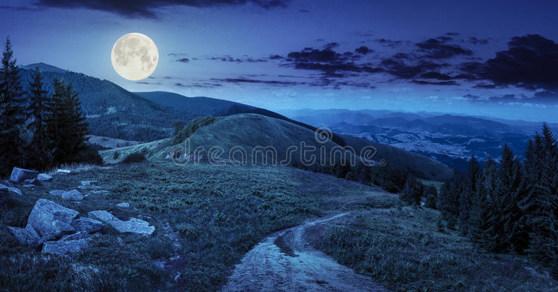 Pine trees near valley in mountain at night royalty free stock photos