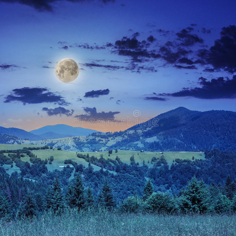 Pine trees near valley in mountains on hillside at night. Mountain summer landscape. pine trees near meadow and forest on hillside under sky with clouds at night royalty free stock photo