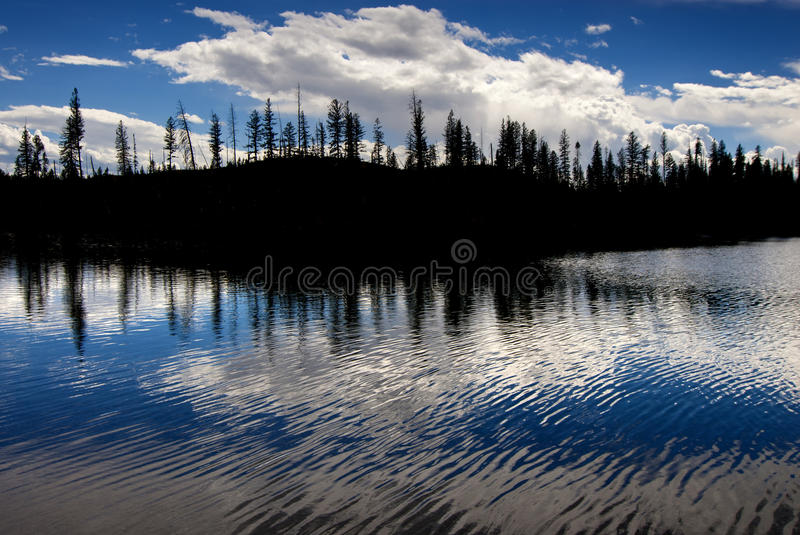 Pine Trees Silhouetted in River Lake royalty free stock photography
