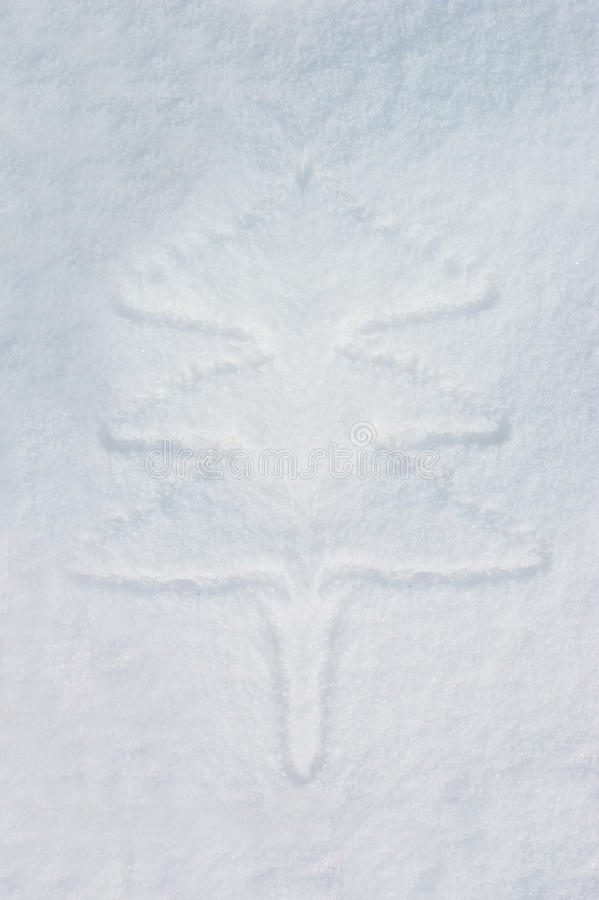 Download Pine trees in the snow stock image. Image of snow, background - 22259725