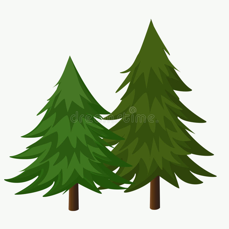 pine trees vector illustration coniferous tree stock vector rh dreamstime com pine tree vector illustration pine tree vector free download